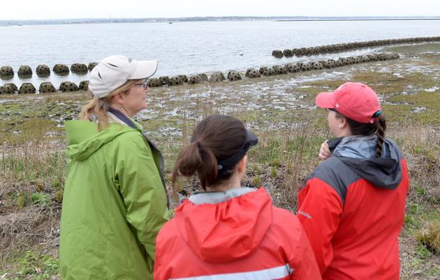 Connecticut's First Living Shoreline is Thriving at Stratford Point