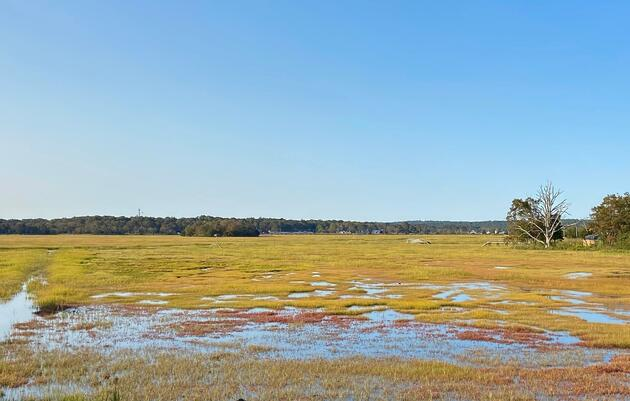 Salt Marsh Projects in Connecticut Aim to Create More Resilient Coastline