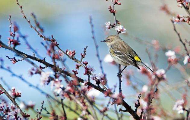 Spring Migration FAQs
