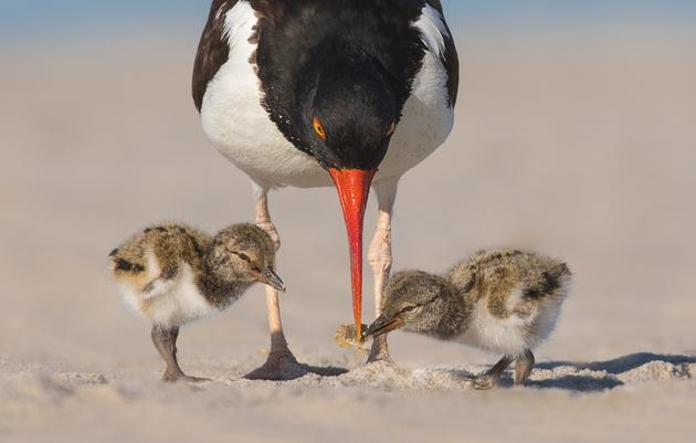 A Colorful Way to Help Keep Shorebirds Safe