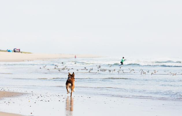 Dogs on Beaches: Know Before You Go