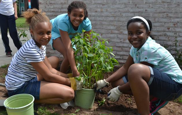 How to Get Started with Your Schoolyard Habitat Project