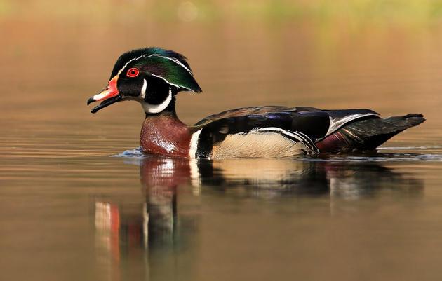 Audubon: Congress Must Pass New Bird Protection Bill