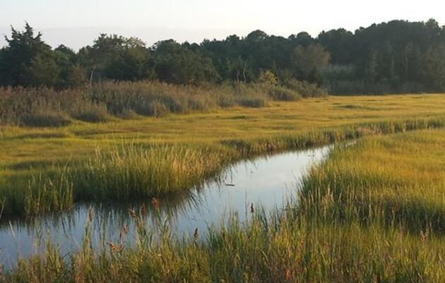 Watch: Coastal Resilience Webinar