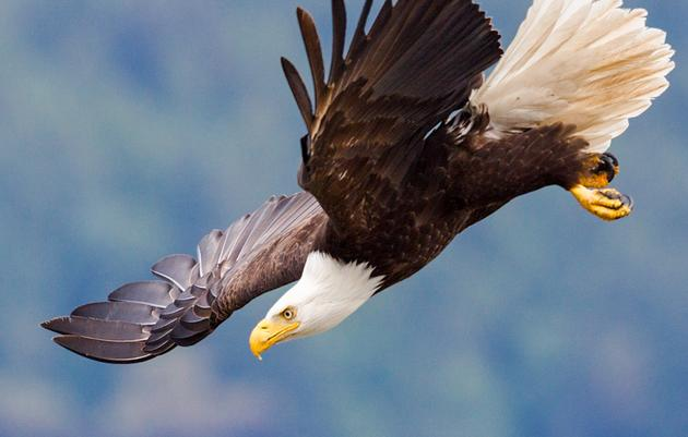 Help Save America's Birds and Other Wildlife