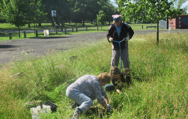 Taking Back the Land...From Invasive Plants