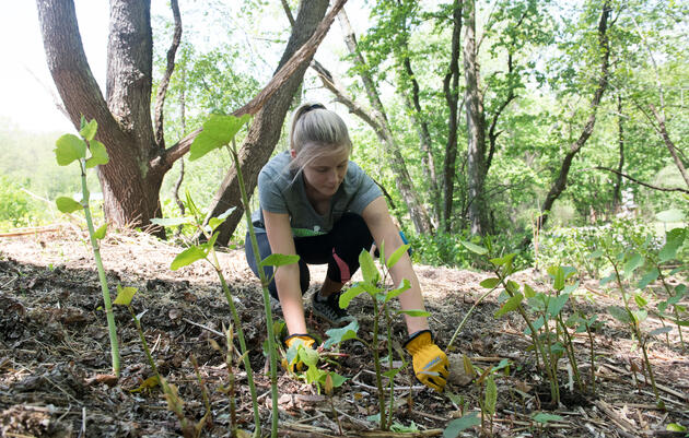 8 Ways to Improve Your Woodland Habitats