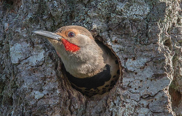 Managing Forests for Trees and Birds in Connecticut