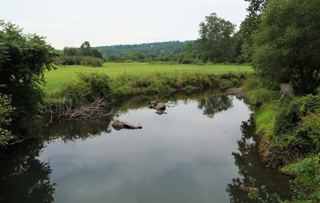 Salmon Kill Creek Riparian Restoration