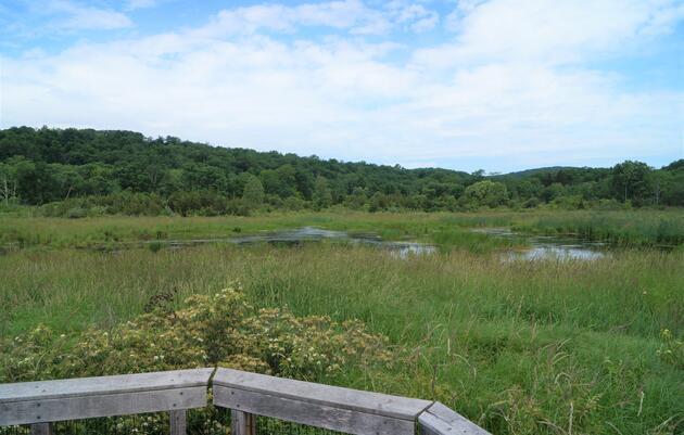 Wimisink Marsh Important Bird Area Expansion
