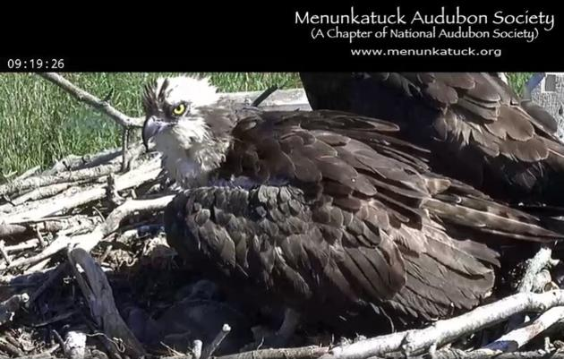 Audubon Live !