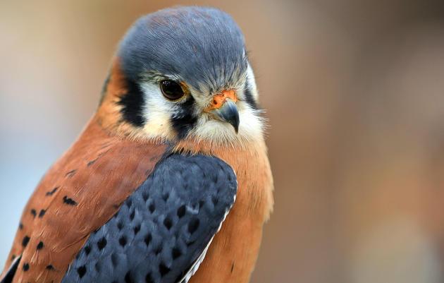 Audubon Sharon