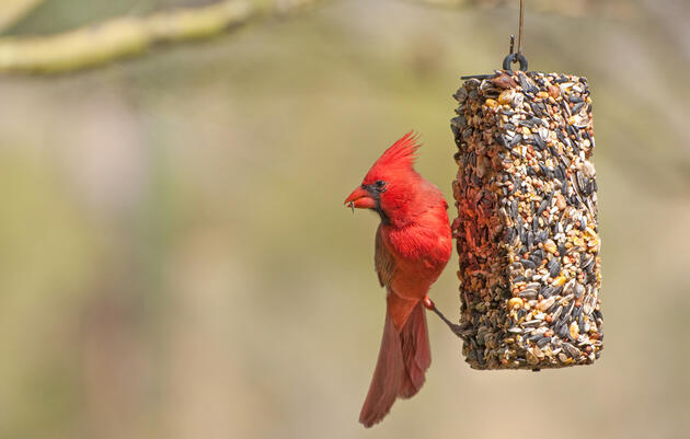 Audubon Guide to Bird Feeding