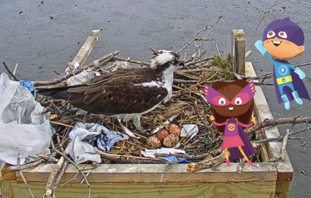 The Story of Olivia the Osprey