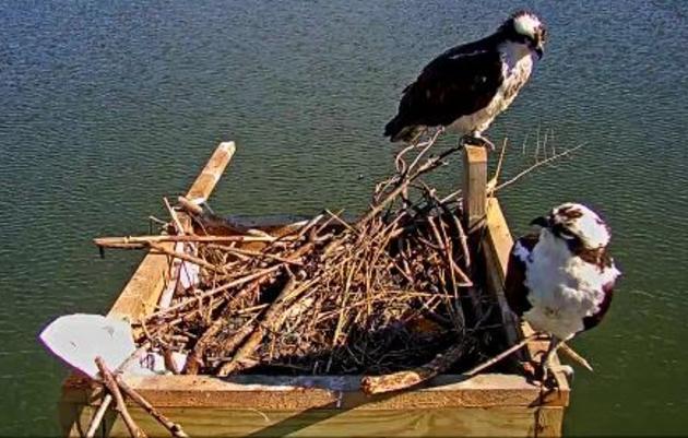 Audubon Live!