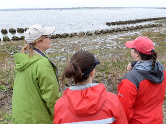 Connecticut's First Living Shoreline is Thriving