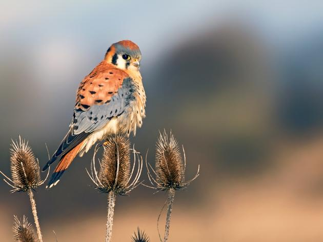 Best of 2019: Audubon Connecticut in Action