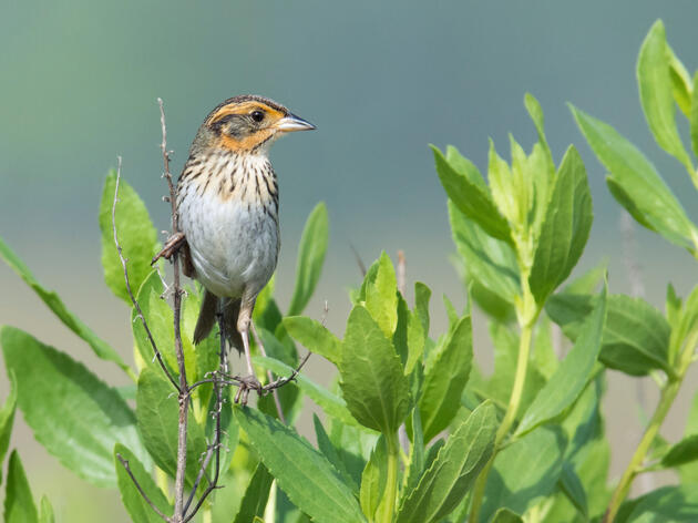 Funding for Climate Adaptation Critical for Birds, People, and Communities