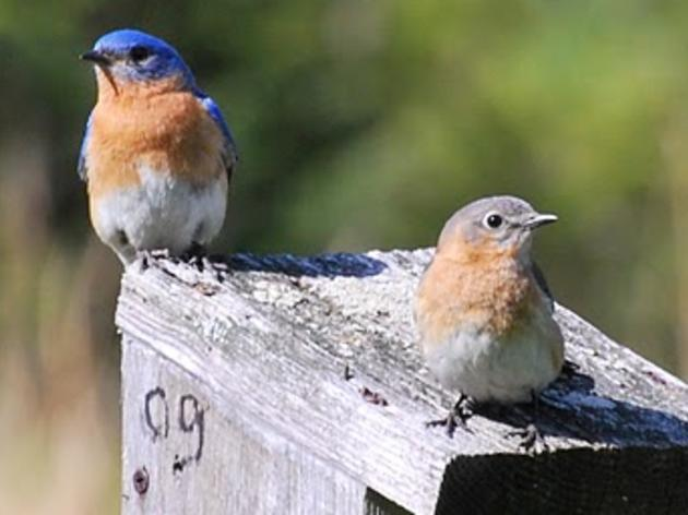 Join Us for an Orientation for Bird Monitoring at Urban Oases Sites