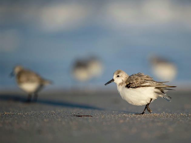 Five Climate-Threatened Birds and How You Can Help Them