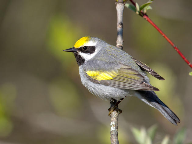 Audubon Applauds Advance of Wildlife Recovery Bill by House Committee