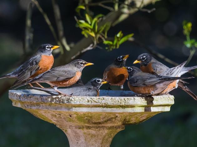 Audubon Connecticut Welcomes Robert O. Dryfoos and Robert J. Klee to Board of Directors