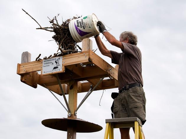 Where did the Osprey cams come from?