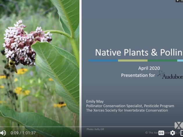 An Inside Look: Native Plants and Pollinators