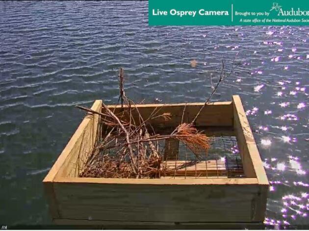 Audubon CT's Live Osprey Cam