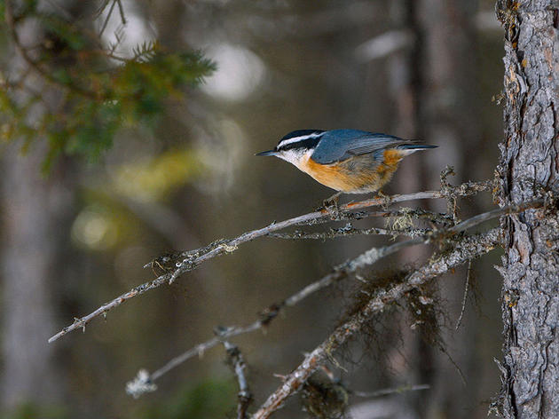 If You Can Identify Any of These Birds, You're Ready for Climate Watch