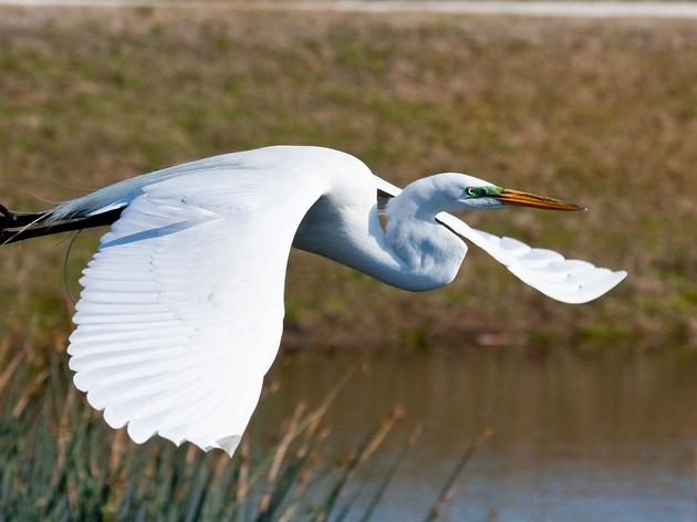 Sharing the Waterways: A Guide to Boating with Birds