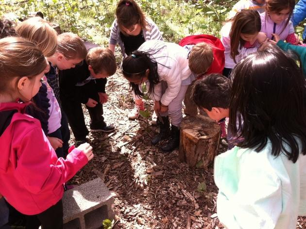 2 Grants Available for the 2017-2018 Schoolyard Habitat Program