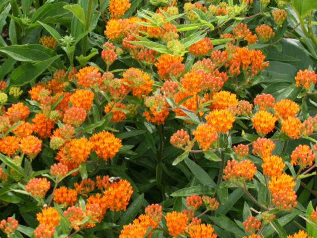 15 Great Deer-Resistant Native Plants