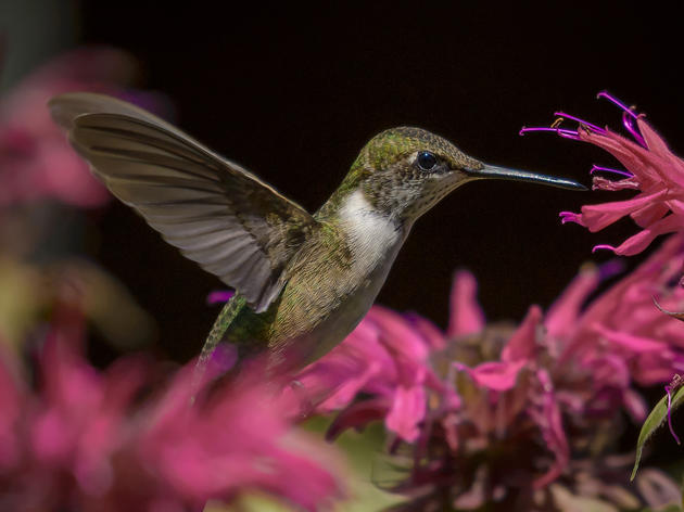 10 Terrific Plants for Hummingbirds—and Pollinators