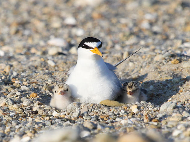 More Than 500 Organizations in All 50 States Urge Congress to Defend Bird Protection Law