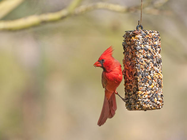 Audubon Guide to Bird Feeding