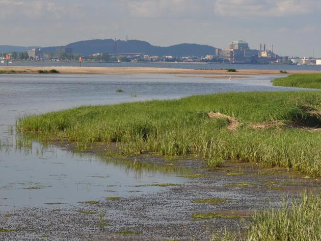 "Why West Haven Won Audubon's ""Share the Shore Award"""