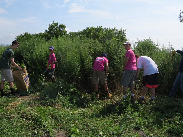 Eagle Scouts Dig-in to Habitat Restoration in West Haven