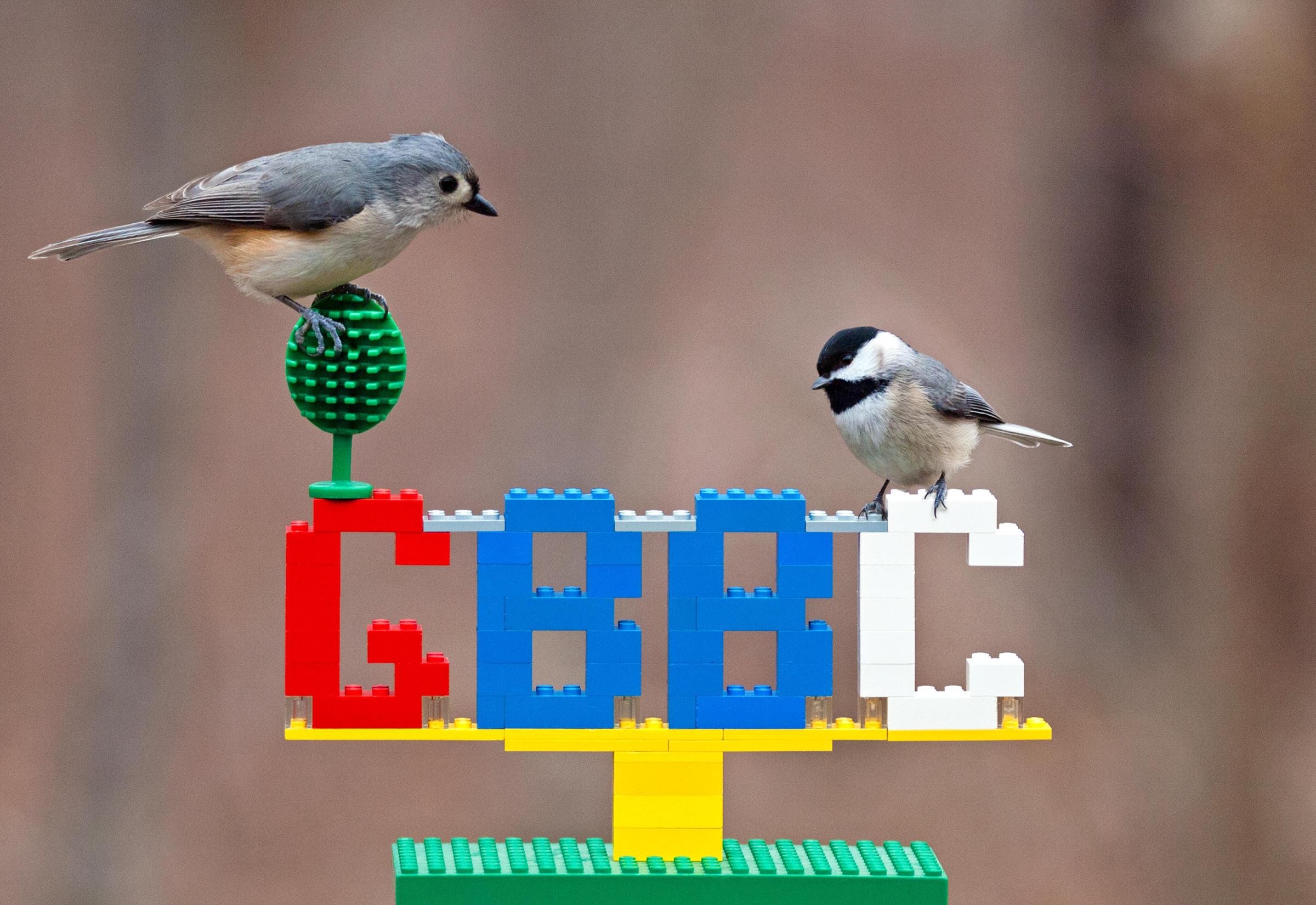 The Great Backyard Bird Count   Audubon Connecticut